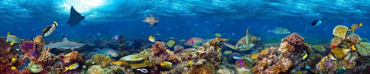 kolorowe super szerokie podwodne rafa koralowa panorama transparent tło z wielu ryb rekin żółw i życia morskiego