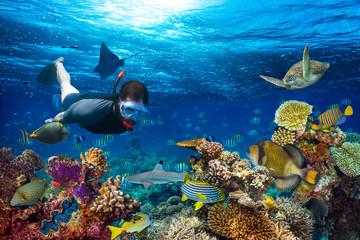 młody mężczyzna snorkler zwiedzania kolorowe podwodny świat rafa koralowa z wieloma rybami rekin żółw morski snorkling tle