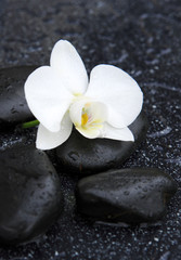 Single white orchid and black stones close up.