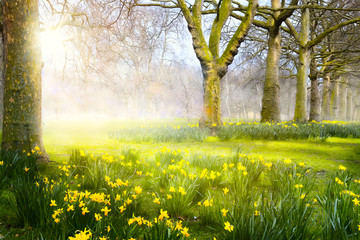 Art spring flowers in the park; Easter landscape