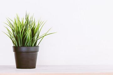 Green grass in a pot