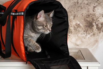 Cat in carrier bag on table