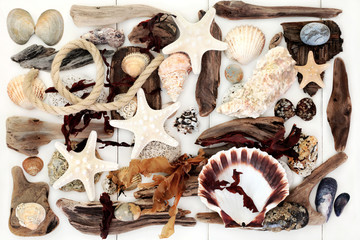 Driftwood, Seashell and Seaweed Abstract Background.