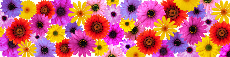 Beautiful flowers on a white background