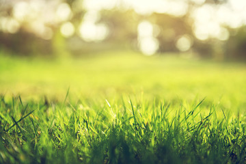 Spring and nature background concept, Close up green grass field with blurred park background and sunlight.