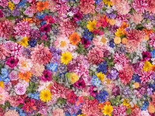 Barwiący kwiat ściany tło