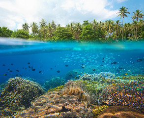 Coral reef with many small colorful fish  in tropical sea on a background of coast island