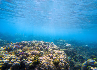 Underwater landscape with coral reef. Tropical seashore perspective photo