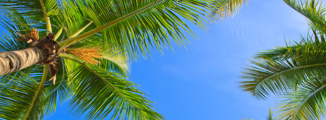 Green palms and blue sky.