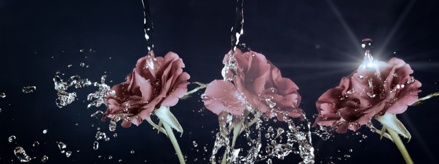 Rose flower in the rain,  drops of water shining, vintage, retro effect..