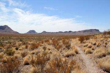 Ścieżka przez pustynny krajobraz / Park Narodowy Big Bend / Teksas / USA