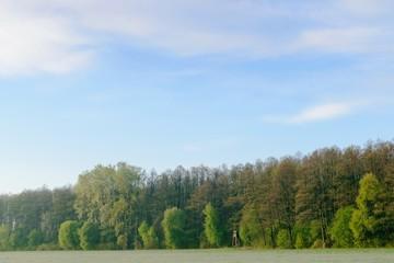 Wiosenny pejzaż, las i niebo.