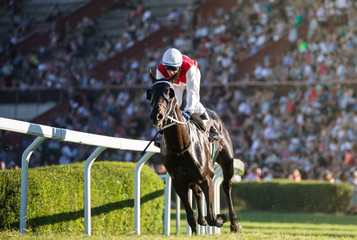 Jockey during horse races on his horse goes towards finish line. Traditional European sport.