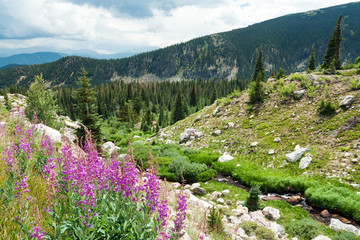 Colorful spring wildflowers in Colorado Mountain landscape