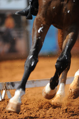Close up on a bay horse legs during a dressage competition