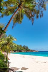 Kokosowe palmy na białej, piaszczystej plaży.
