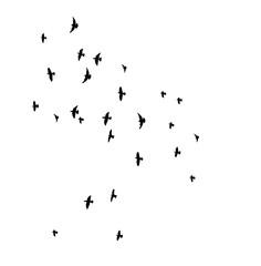 Silhouette of flying birds, flight,
