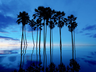 Silhouettes of palm trees against the sky. Tropical sunset background