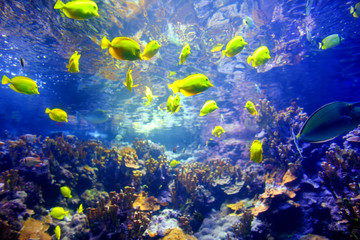 Colorful tropical fish living in coral reefs of Maui, Hawaii