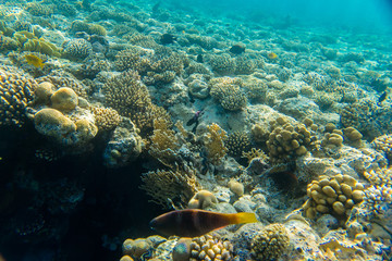 beautiful coral reef under water