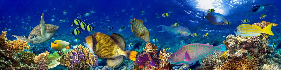 colorful wide underwater coral reef panorama banner background with many fishes turtle and marine life