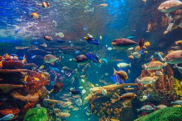 Ławica grupy wielu czerwonych żółtych tropikalnych ryb w niebieskiej wodzie z rafą koralową, kolorowy podwodny świat, miejsce na tekst, tapeta