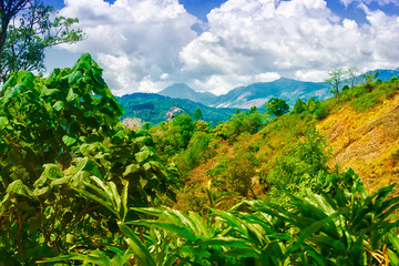 scene of India with hills, green plantations cardamom and blue sky, Kerala, Munnar, India