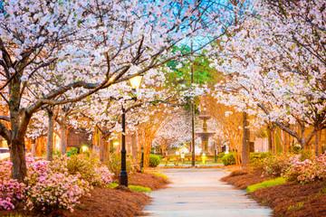 Macon, Georgia, USA w sezonie kwitnienia wiśni.