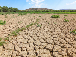 Dramatic view - dry cracked earth with green plants