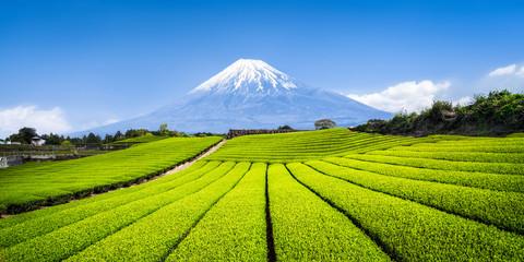 Mount Fuji mit Teefeldern in Shizuoka, Japan