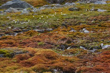 Brown tundra landscape on high mountain plateau, Norway