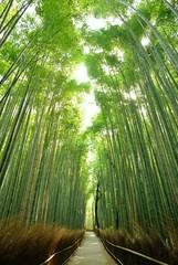 空に伸びる竹/朝陽が零れる竹林です.