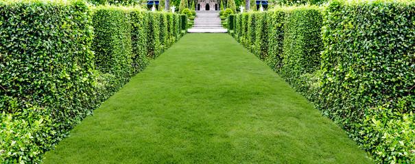 beautiful green grass walkway for background