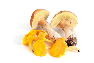 Penny bun and Golden Chanterelles mushrooms on white isolated background