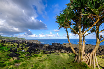 Common screwpine and Reunion island shore