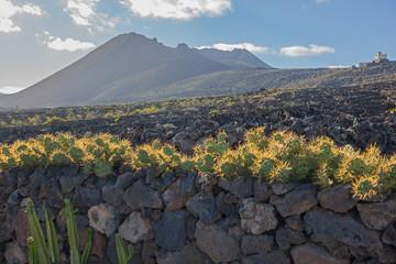 Kaktusowe zarośla na czarnej kamienistej ścianie na tle gór wulkanicznych w świetle wieczoru w parku kaktusów na wyspie Lanzarote, Wyspy Kanaryjskie, Hiszpania
