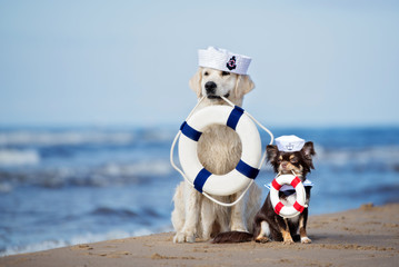 two adorable dogs holding life buoys on the beach