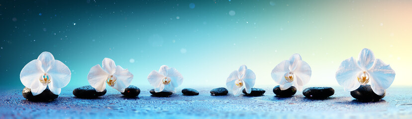 Orchids In Row On Spa Stones In Fresh Background