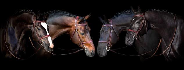 Horses portrait in bridle on black background. Banner for website