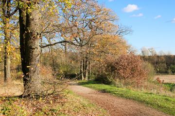 Sentier de promenade au milieu d'un espace boisé
