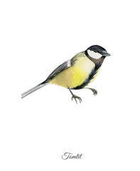 Handpainted watercolor poster with tomtit