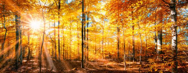 Lasowa panorama w złotej jesieni