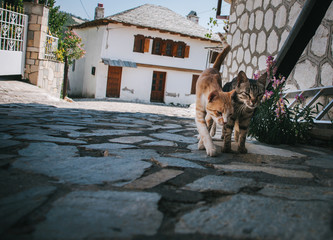 Stray cats on Greek island of Thassos