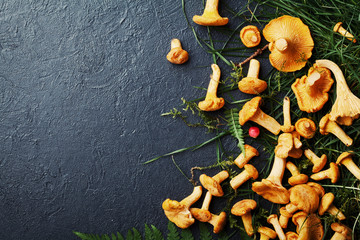 Heap of yellow mushrooms chanterelle (cantharellus cibarius) with forest plants on dark kitchen table top view. Copy space for text.