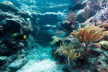 Beautiful coral reef in sea, Mexico
