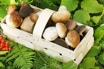 Mushrooms, Pilze, Steinpilze, im Korb, Textraum, copy space