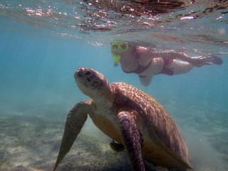 Bardzo wybredny żółw morski