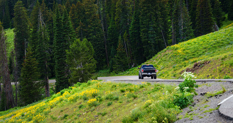 A black pickup, driving, traveling in the mountain road, highway. Green trees, forest in the  background. View of the road bend and a mountain range of Rocky Mountains, Yellowstone, USA