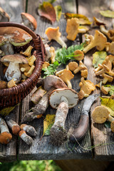 Edible wild mushrooms on old wooden rustic table
