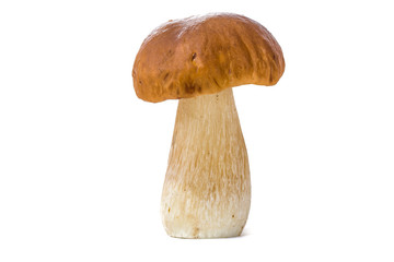Boletus mushroom isolated